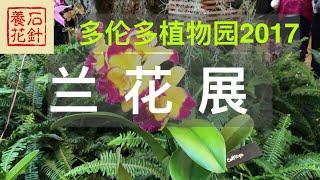 多伦多植物园 兰花展 2017 02 11 - soos orchids show
