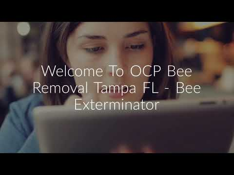 OCP Bee Removal Service in Tampa, FL