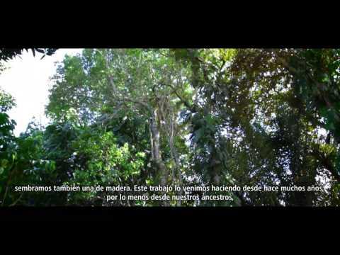 Un bosque de oportunidades en Panamá