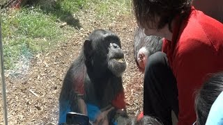 A Lesson in Chimp Behavior video