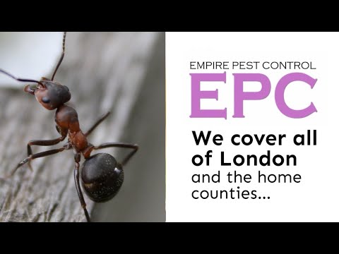 Empire Pest Control Get Rid Of Ants UK