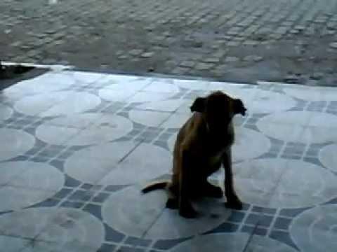 Baixar Cachorra de rua.