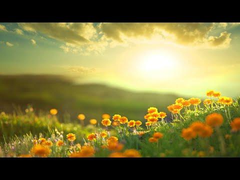 Morning Relaxing Music - Positive Feelings and Energy (Adele)