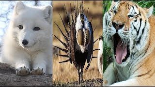 ENDANGERED SPECIES 2019 Full List