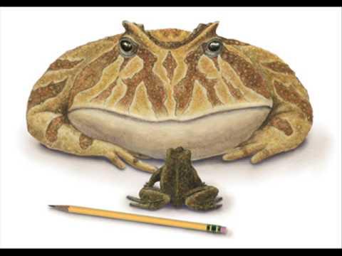 La ptite grenouille (Grandes Chansons Cochonnes)