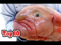 Top 10 UGLIEST ANIMALS