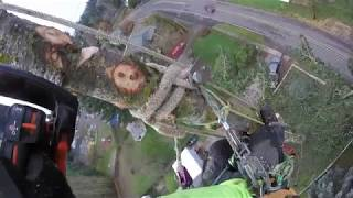 Tree Topping Fail