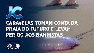 Caravelas tomam conta da Praia do Futuro e levam perigo aos banhistas