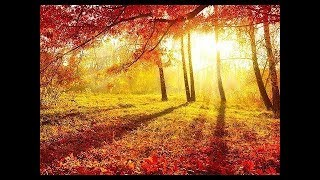 01  AUTUMN PALETTE   Nature Relaxation Video in with Relaxing Piano Music   2 5 HOURS