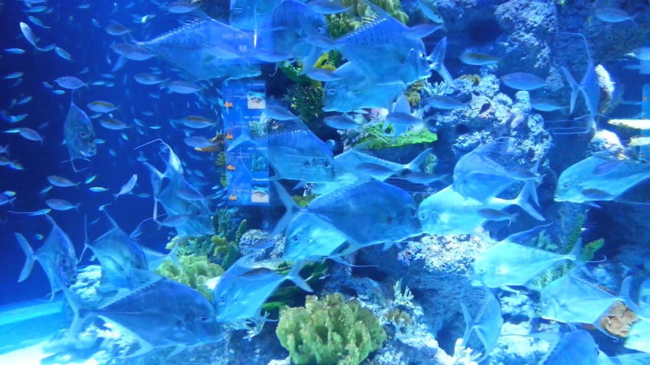 Minimalistische Kucheninsel Aquarium