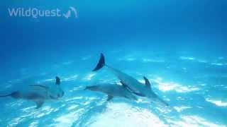 Dolphin Tales 1/2014 - Swimming with wild dolphins