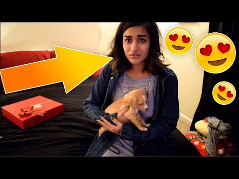 SURPRISING MY GIRLFRIEND WITH A PUPPY! (EMOTIONAL SHE CRIED!!)