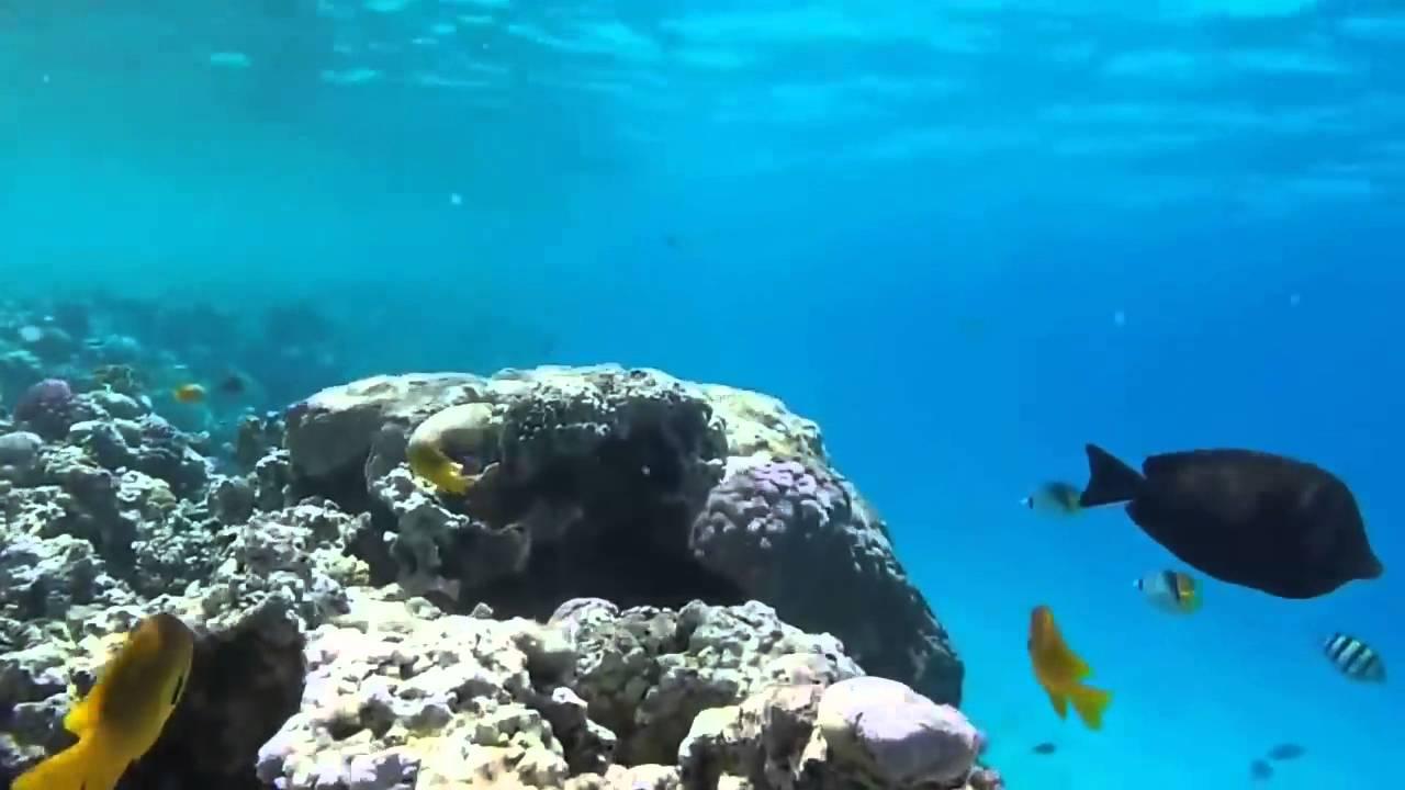 Мировой океан под музыку шри чинмоя