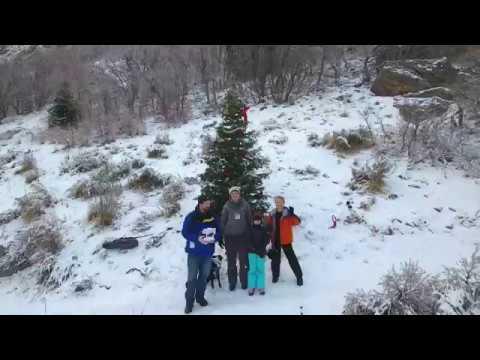 Ogden Christmas Tree