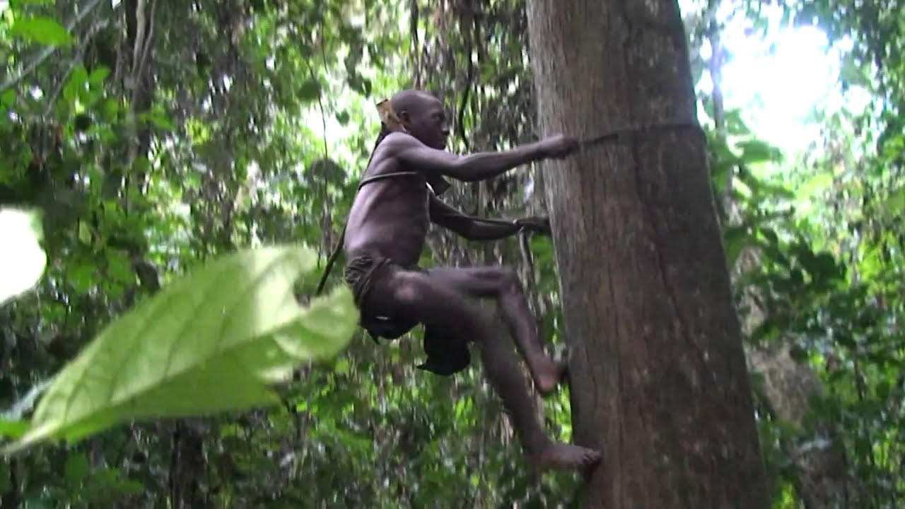 Porn Movies In The Jungle Of Africa 29