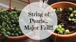 String of Pearls Houseplant - Major Fail on My Part