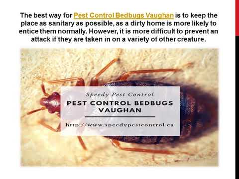 How To Control Bedbugs: Know The Pest Control Methods