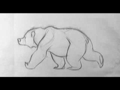 Bear Walk Cycle - YouTube Walking Bear Drawing
