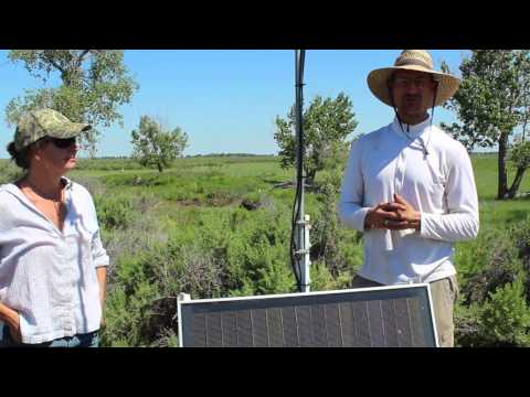 Bat Monitoring on American Prairie Reserve