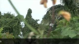 Perkampungan Orang Asli Yang Aneh Di Amazon Youtube