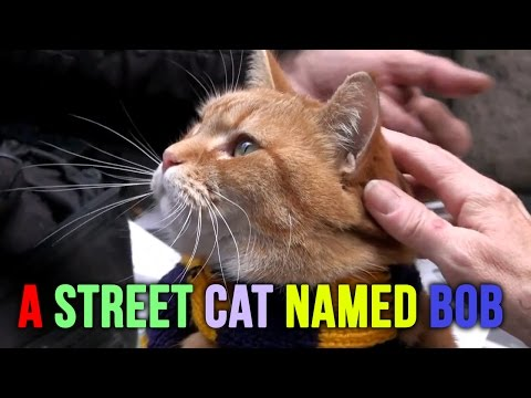 A Street Cat Named Bob....Exclusive Early Footage