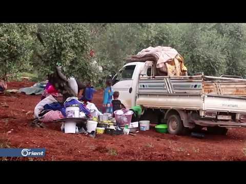 أهالي إدلب يتدارون بأشجار الزيتون من براميل نظام أسد - سوريا