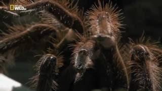 Neuveriteľný svet pavúkov