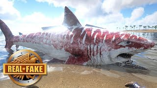 BABY MEGALODON ON BEACH - real or fake?