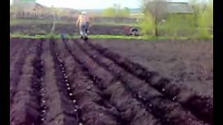 Сажаем картошку быстро