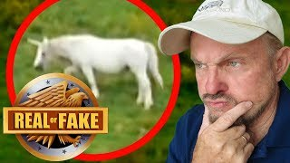 """ARE UNICORNS REAL?  + 4 more """"Real or Fake?"""" Pictures"""