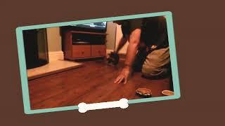 Funny kitten montage