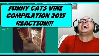 Funny Cats Vine Compilation 2015 Reaction!!! ...