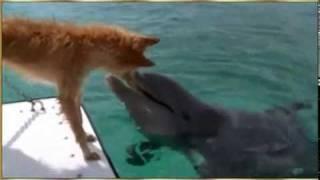 Amistad de perro y delfín