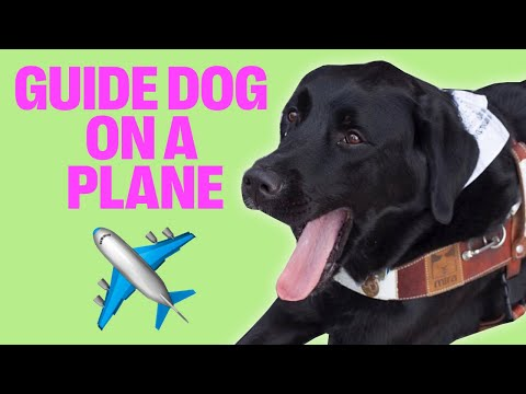 BRINGING A BIG GUIDE DOG ON AN AIRPLANE!