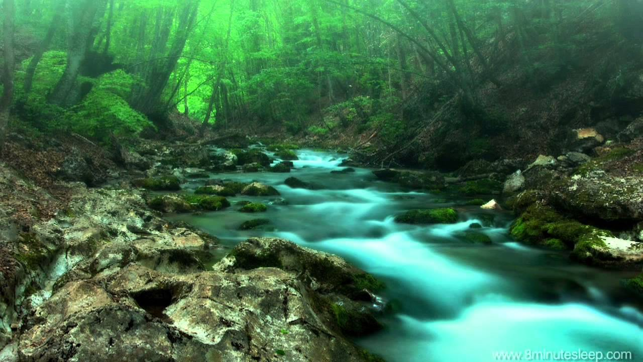 forest nature creek sounds relaxation stress relaxing hours relief sleeping google music
