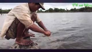 Đặt Lồng Bẫy Bắt Cá Sông Tuyệt Đỉnh Nghệ Thuật Bắt Cá Đỉnh Cao