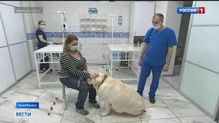 В Челябинске спасли лабрадора, которого хотели усыпить хозяева