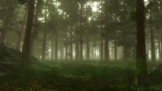 Forest Sounds   Woodland Ambience, Bird Song   3 Hours