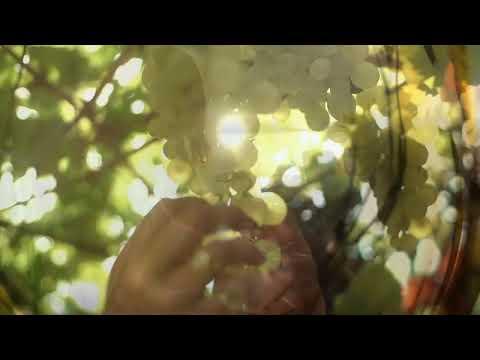 Stellar Organics reklamfilm