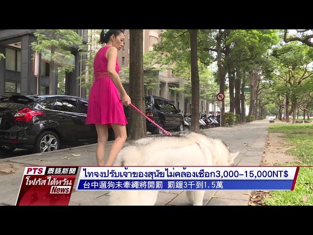ไทจงปรับเจ้าของสุนัขไม่คล้องเชือกจูง 3,000-15,000 NT$