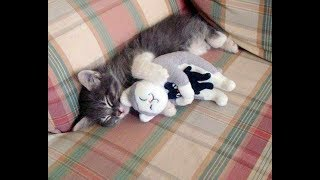 PROOF THAT CATS ARE THE BEST!!! - Cats That Like Hugs Compilation