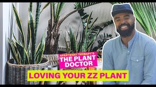 Loving Your ZZ Plant   The Plant Doctor   Apartment Therapy