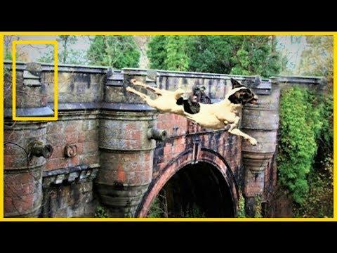 Overtoun Bridge, el puente de los Perros suicidas