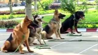 Huấn luyện chó nghiệp vụ trong quân đội