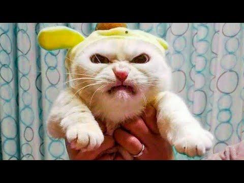 Смешные видео с котами , собаками и другими животными. Ч2