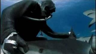 サメと戯れる1