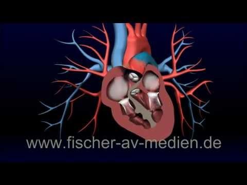 das herz kurz und b ndig 3d animation heart cardiovascula youtube. Black Bedroom Furniture Sets. Home Design Ideas