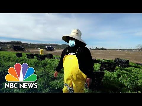 California Farmworkers Struggle To Get Covid Vaccine | NBC News NOW