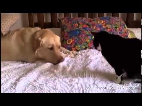 Neobično prijateljstvo