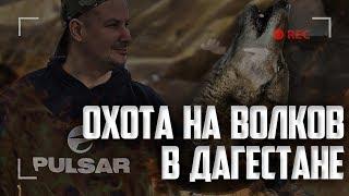 Охота на волка с Пульсар ГУРУ в Дагестане